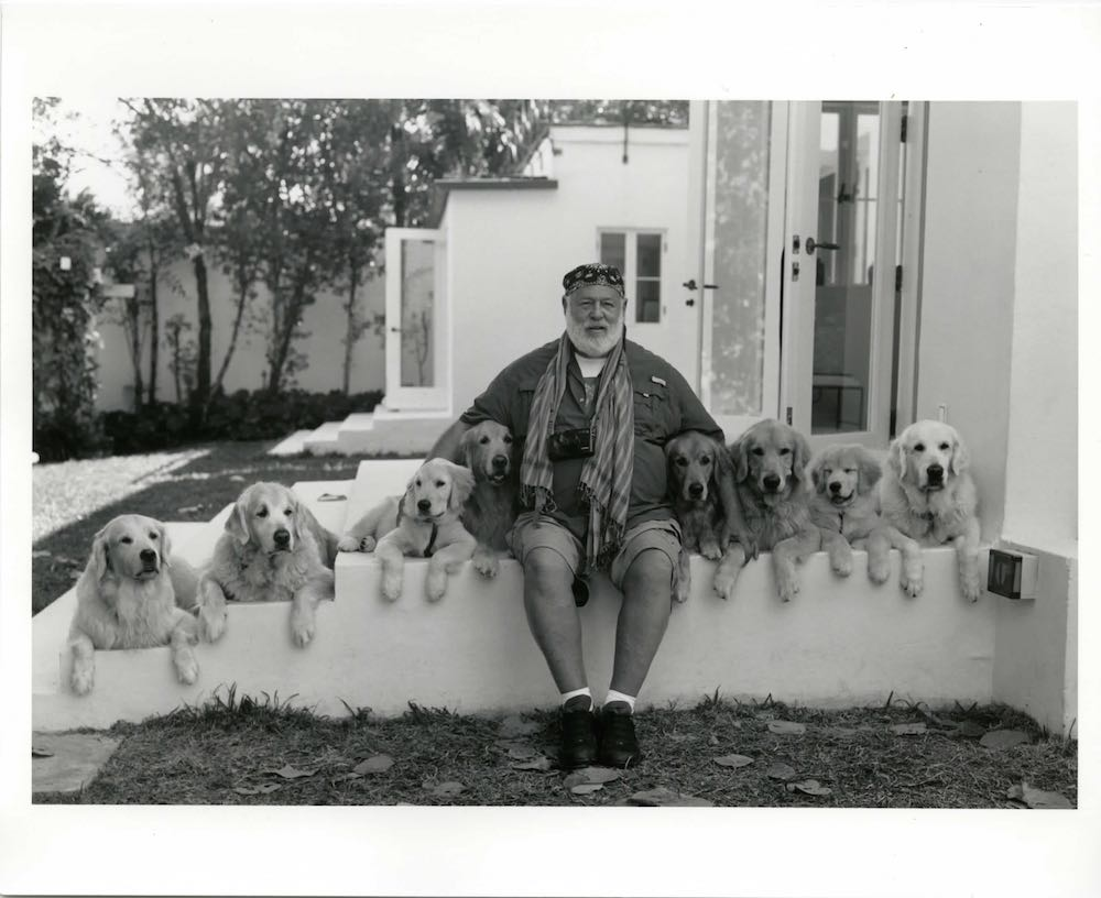 BW & DOGS